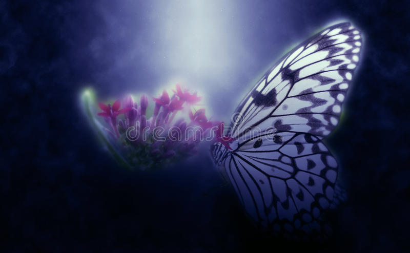Abstract butterfly on flower. Abstract butterfly feeding on green plants and flowers stock photo