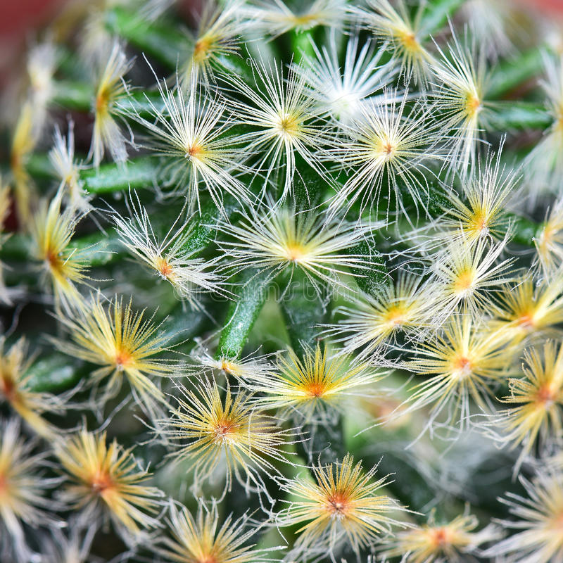 Abstract cactus. Nature background texture, green abstract cactus succulent plant, selective focus royalty free stock photos