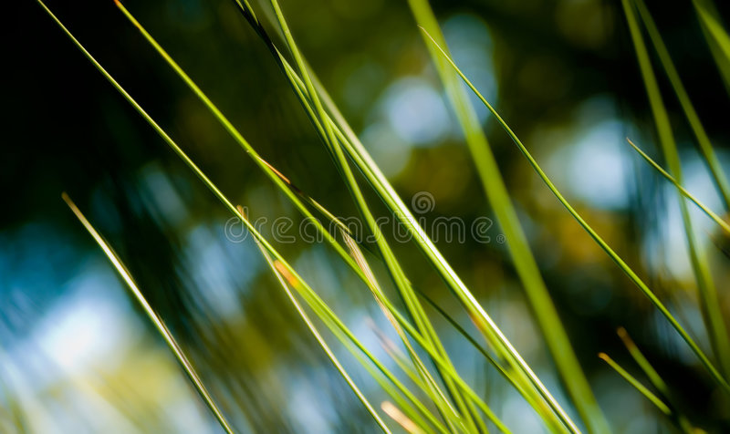 Abstract Cane. Multicolored background of cane plants stock images
