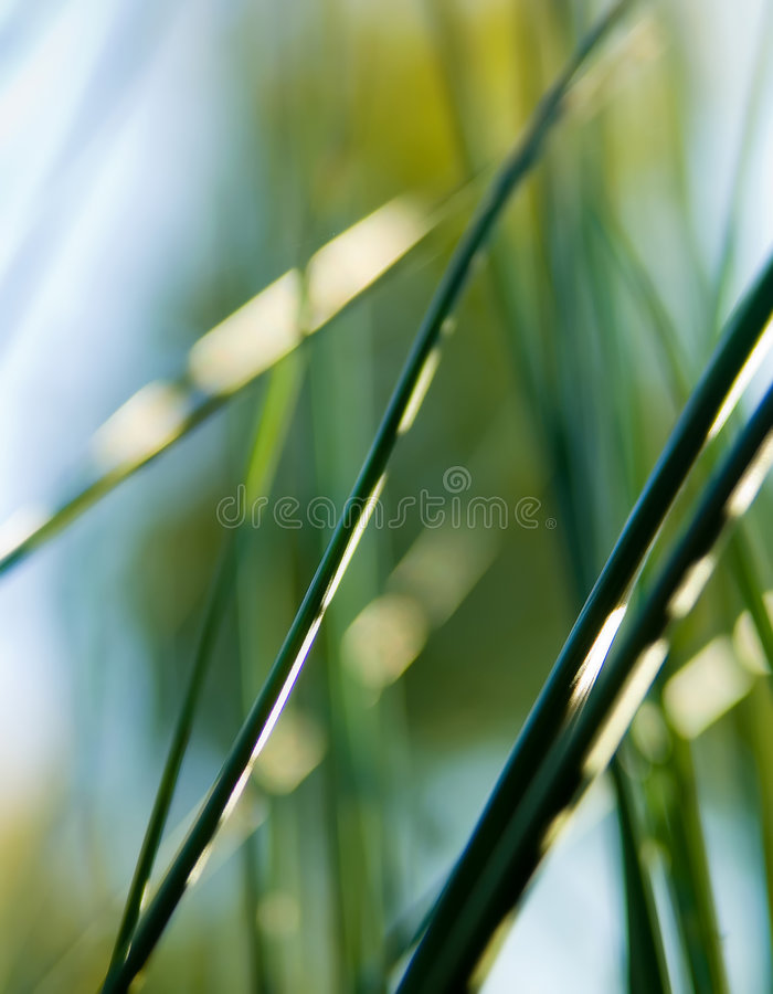 Abstract Cane royalty free stock photography