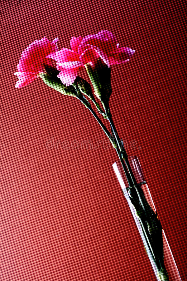 Abstract Carnation Background Design. stock photography