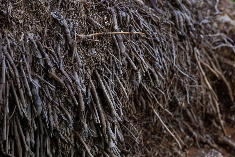 Tiny roots of a huge tree of brown color royalty free stock photo
