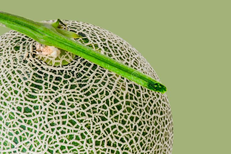 Abstract close up of Fresh melon or cantaloupe large green isolated on with green background. This has clipping path stock photography
