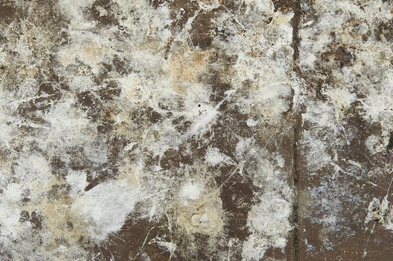 Abstract Closeup Of Concrete Floor Splashed With Paint Texture. Closeup of bark texture for background or texture overlays use stock photo
