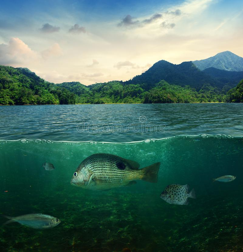 Abstract tropical underwater sea life stock photo