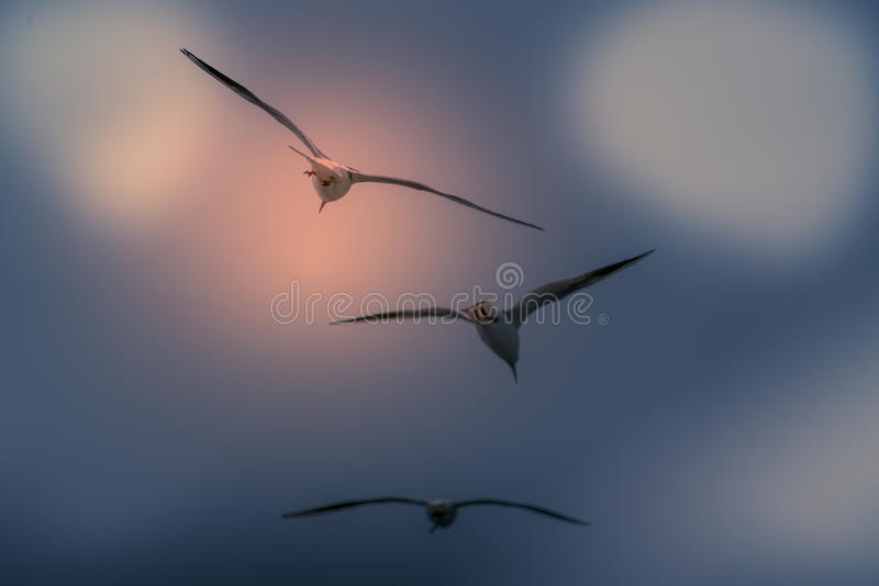 The abstract color background of group seagull flying. Abstract color background of group seagull flying royalty free stock photo