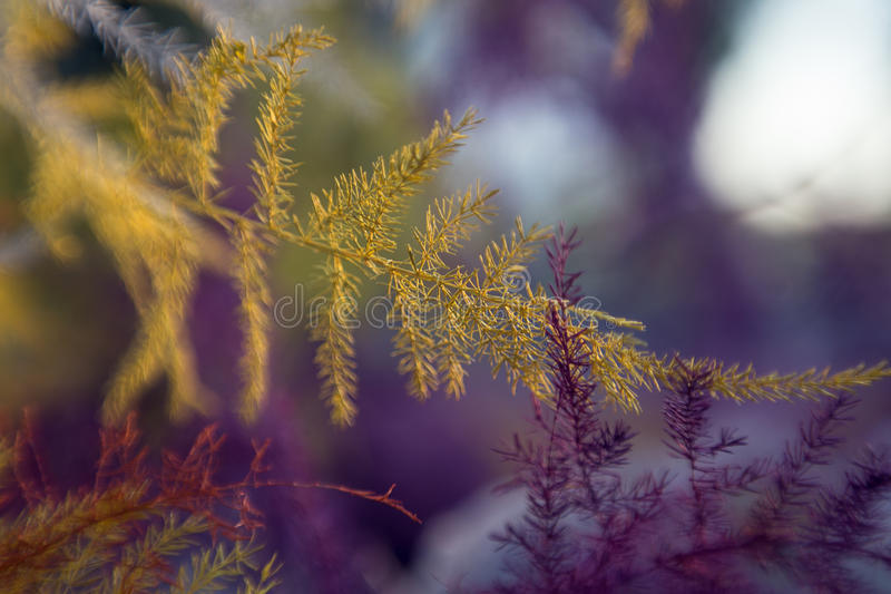 Abstract colored plants macro background royalty free stock photography