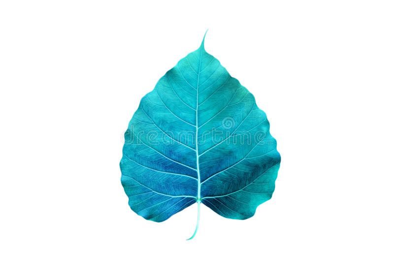Abstract colorful blue leaf, isolated on white background stock image