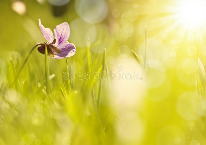 Abstract colorful spring background. Abstract colorful blurred spring background stock image