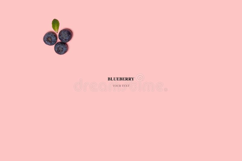 Abstract composition of blueberries on a pink ibackground royalty free stock photo