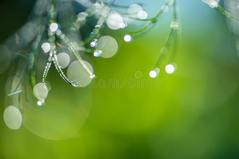 Abstract composition with dew drops over dill plants royalty free stock photos