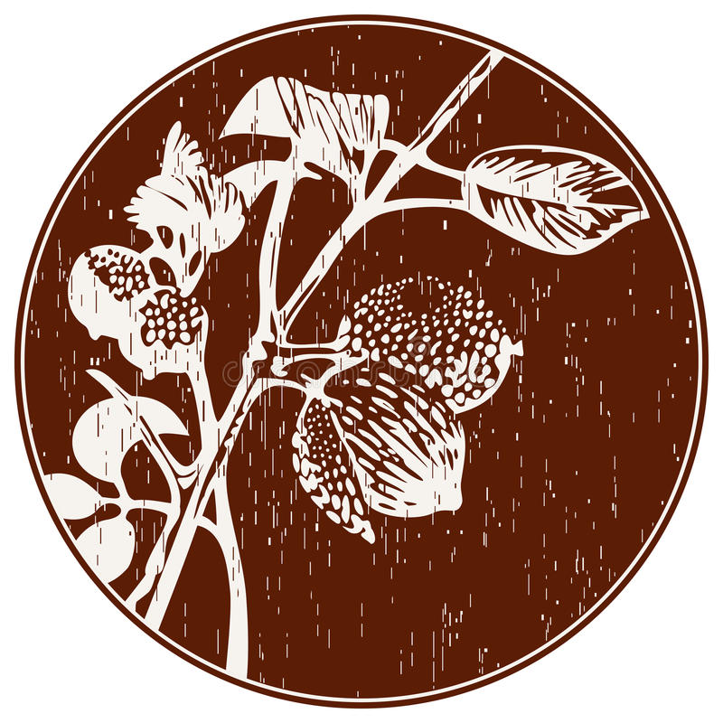 Abstract Composition With Nutmeg. Hand drawn branch of nutmeg on dark round background. Scratched elements and grange style like gravure. Engraved spice herb stock illustration