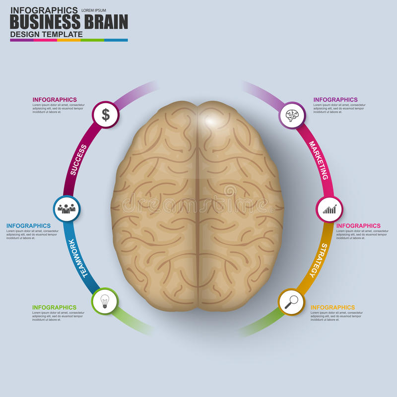 Abstract 3D digital business brain Infographic vector illustration