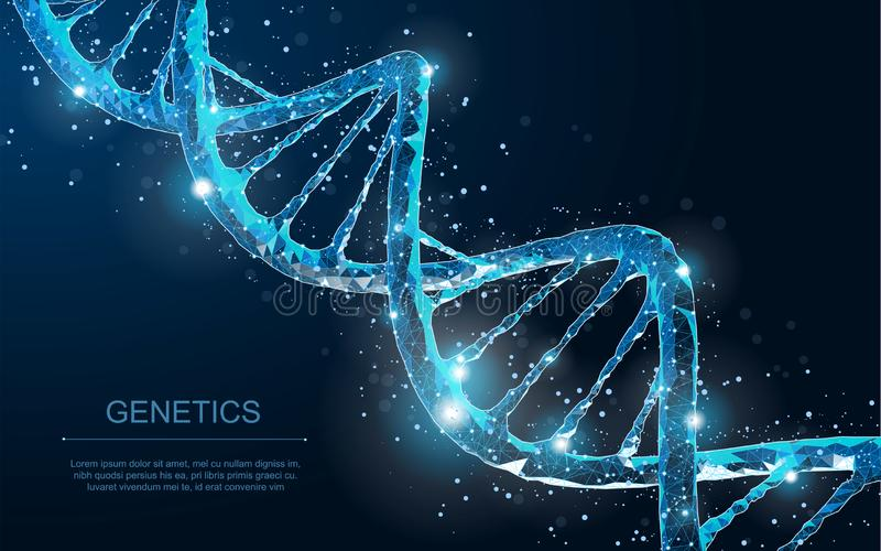 Abstract 3d polygonal wireframe DNA molecule helix spiral on blue. vector illustration