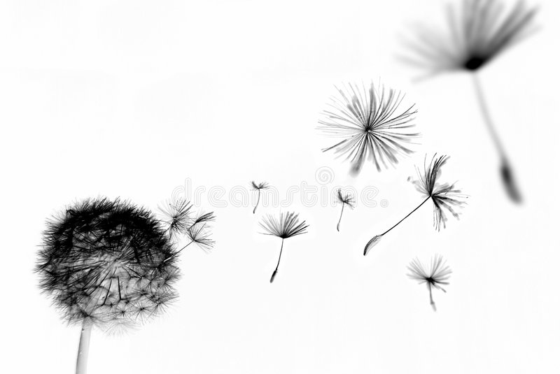 Abstract dandelion royalty free stock photos