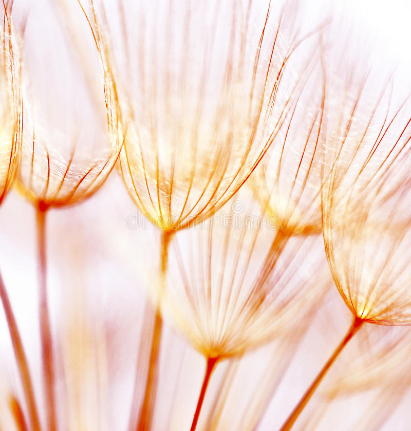 Abstract dandelion flower background royalty free stock photos