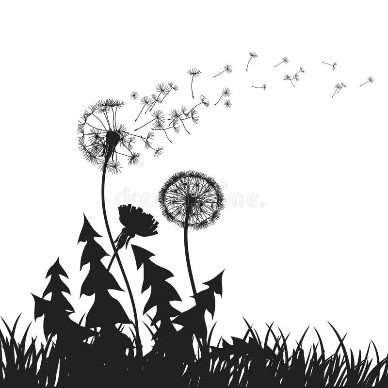 Abstract Dandelions dandelion with flying seeds - vector royalty free illustration