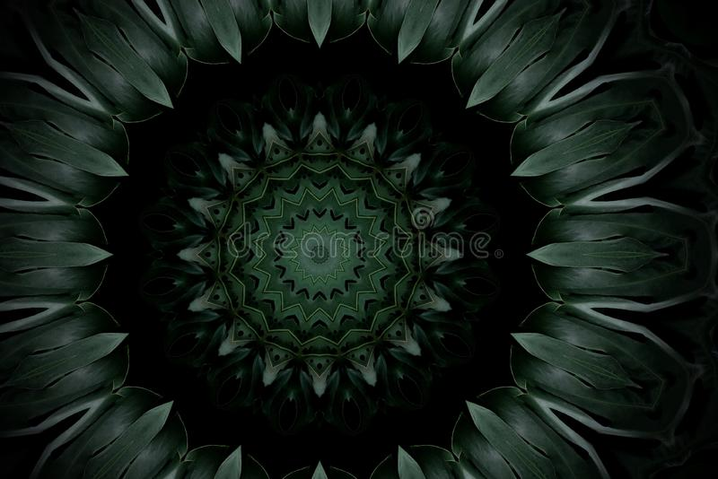 Abstract dark green mandala floral pattern of palm monstera leaves with kaleidoscope effect. royalty free illustration