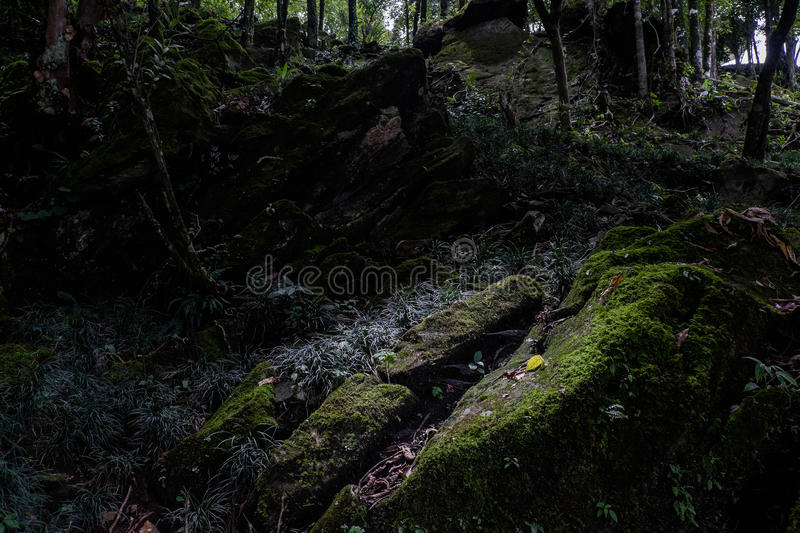 Abstract Dark nature stock photography