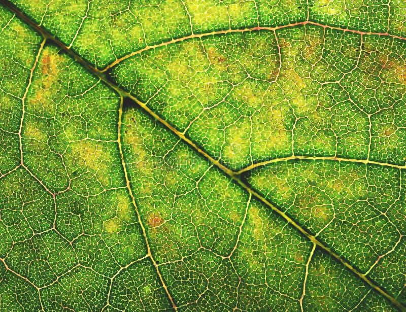 Abstract de boomblad van het illustratiedetail stock afbeelding