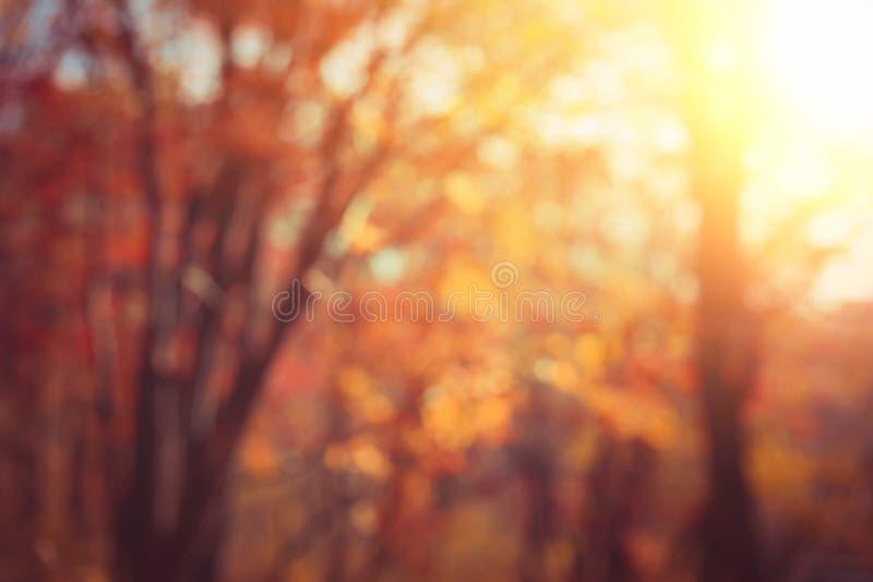 Abstract de herfstbos stock fotografie