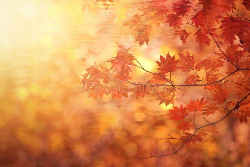Abstract de herfstbos royalty-vrije stock afbeeldingen