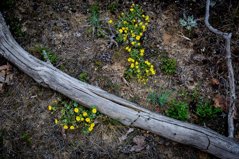 Dead tree among wild flowers. Abstract dead tree among wild yellow flowers on meadow stock photo