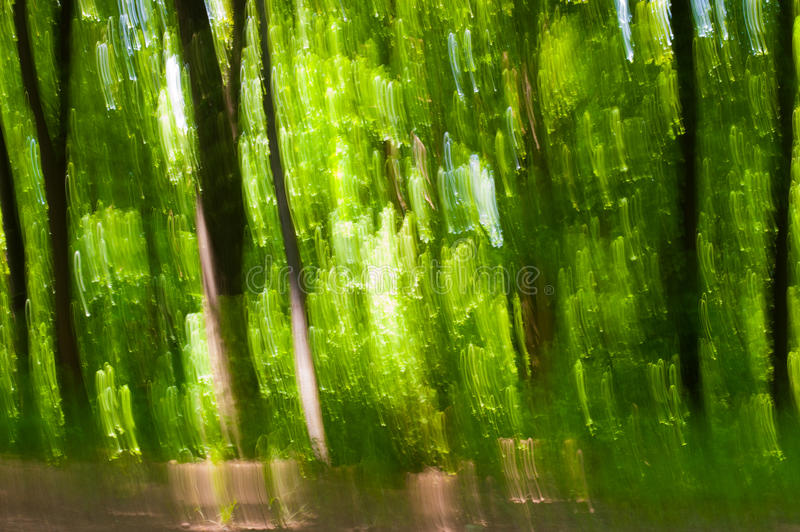 Abstract defocused forest. Abstract photo of forest, defocused on purpose to make it look like impressionistic painting, using vertical movement of camera during royalty free stock images
