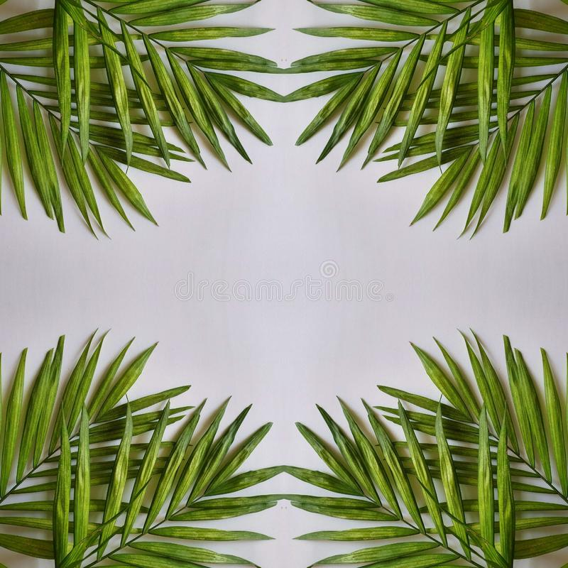 abstract design with palm plant leaves and light gray background stock illustration