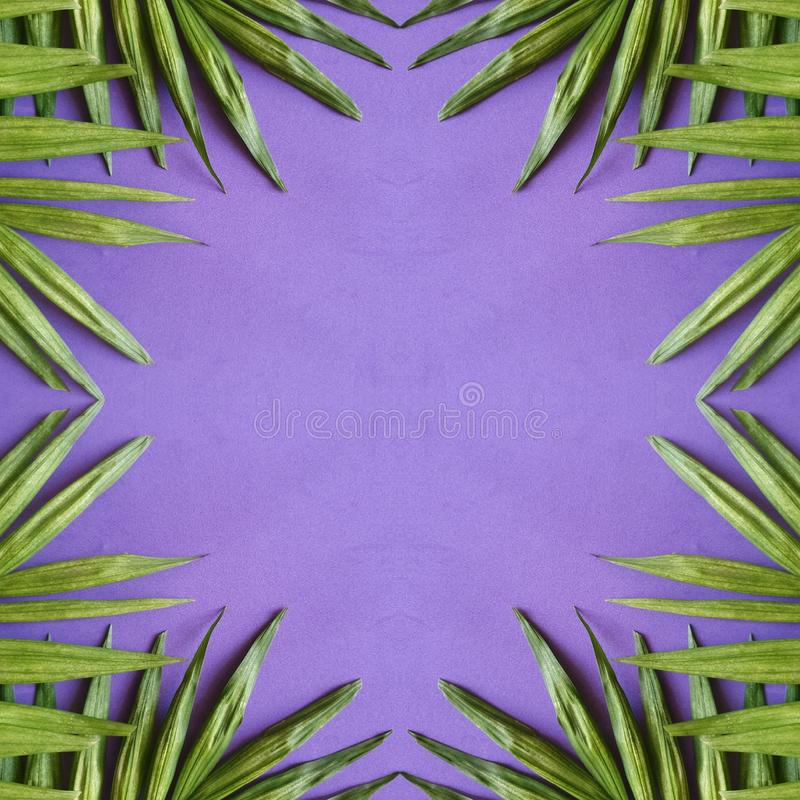 abstract design with palm plant leaves and purple background vector illustration