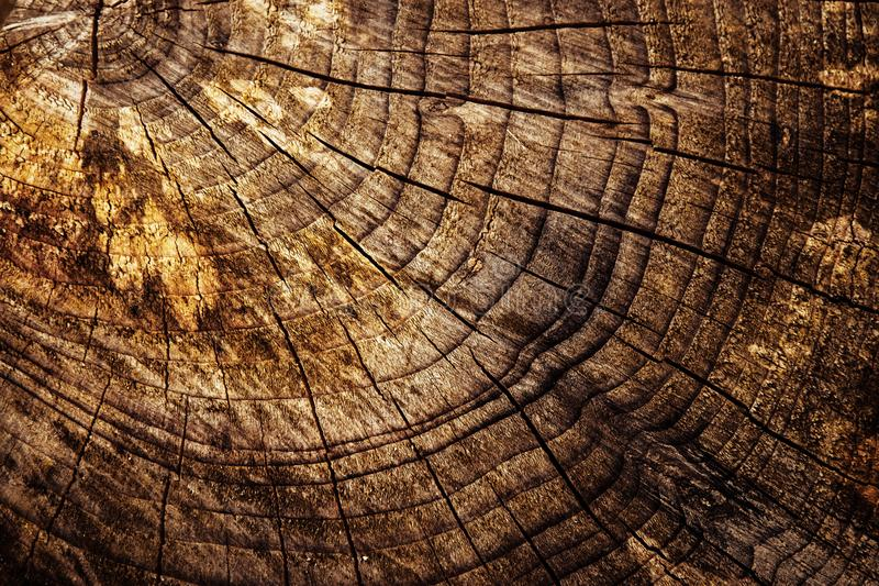 Abstract detail of an old stump sawn royalty free stock images