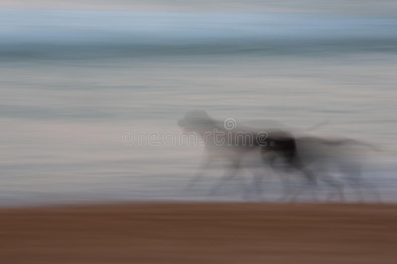 Abstract dog running with blurred panning motion. Abstract dog running with ocean and sky background with blurred panning motion causing soft feel stock photography