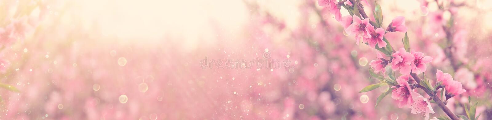 abstract and dreamy banner background of of spring blossoms tree with pink flowers. selective focus. glitter overlay. stock photos