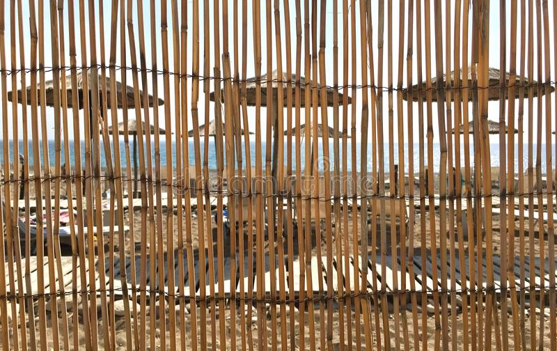 Abstract of dried reeds. With sandy beach and umbrellas in the background. A concept for background, vacation, relaxation,summer stock photo