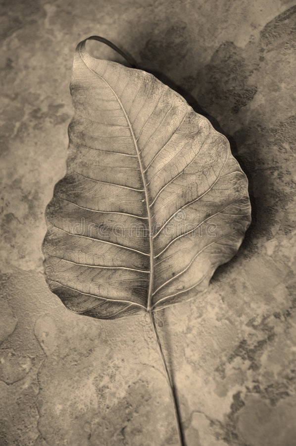 Abstract droog blad stock afbeelding