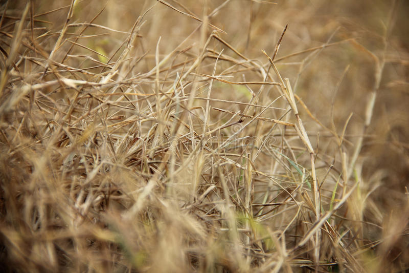 Abstract dry grass in a meadow. Before sunset, selective focus closeup stock photo