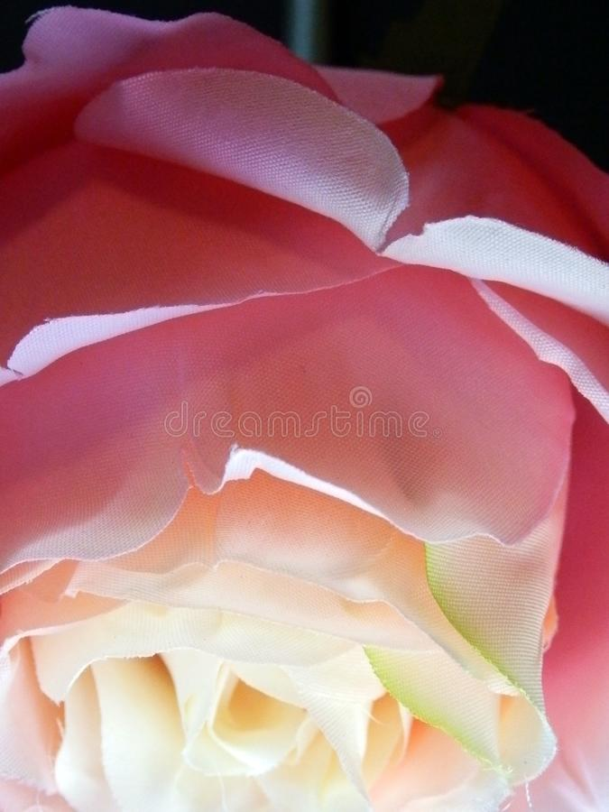 Abstract Fabric Rose Roses Rainbow. Adjusted contrast saturation and sharpened royalty free stock image