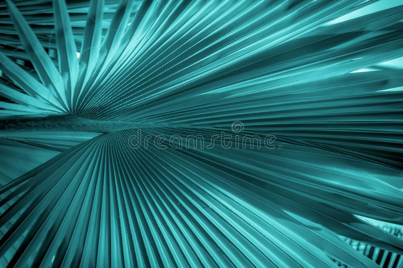 Abstract fan palm leaf background stock photography