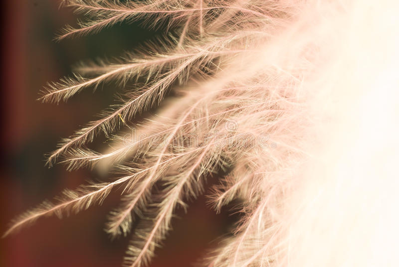Abstract feather pattern royalty free stock photo