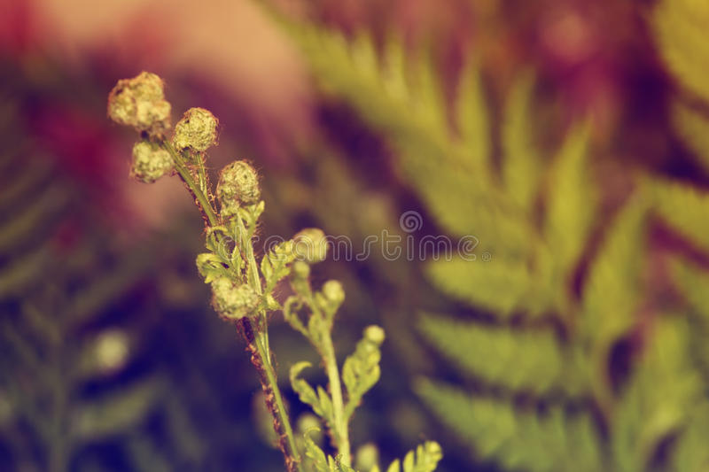 Abstract fern background stock image