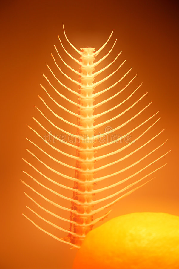 Abstract fishbone still-life stock photography