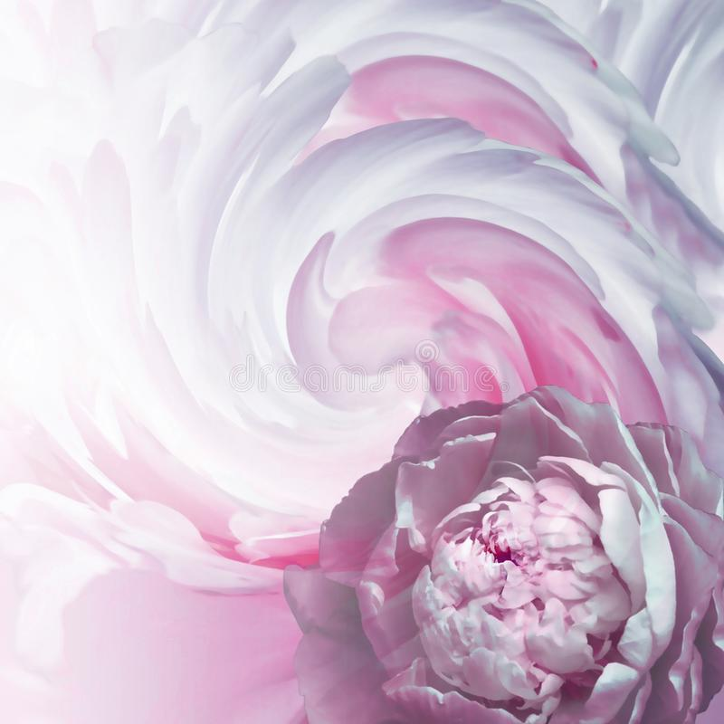 Abstract floral background. A flower of a light pink peony on a background of twisted petals. Greeting card. stock photography