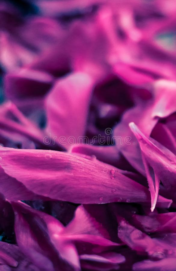Abstract floral background, purple flower petals in water. Beauty of nature, dream garden and wedding backdrop concept - Abstract floral background, purple stock photo