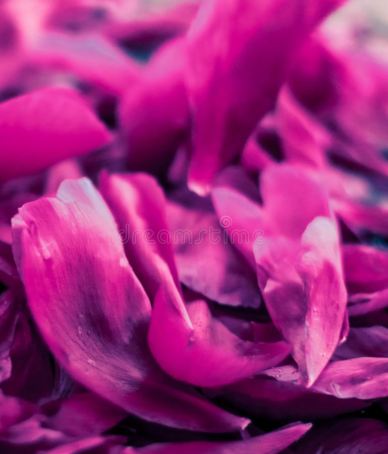 Abstract floral background, purple flower petals in water. Beauty of nature, dream garden and wedding backdrop concept - Abstract floral background, purple royalty free stock images