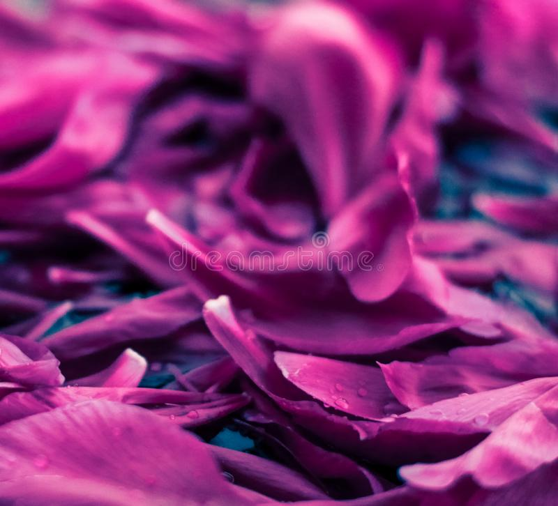 Abstract floral background, purple flower petals in water stock photos