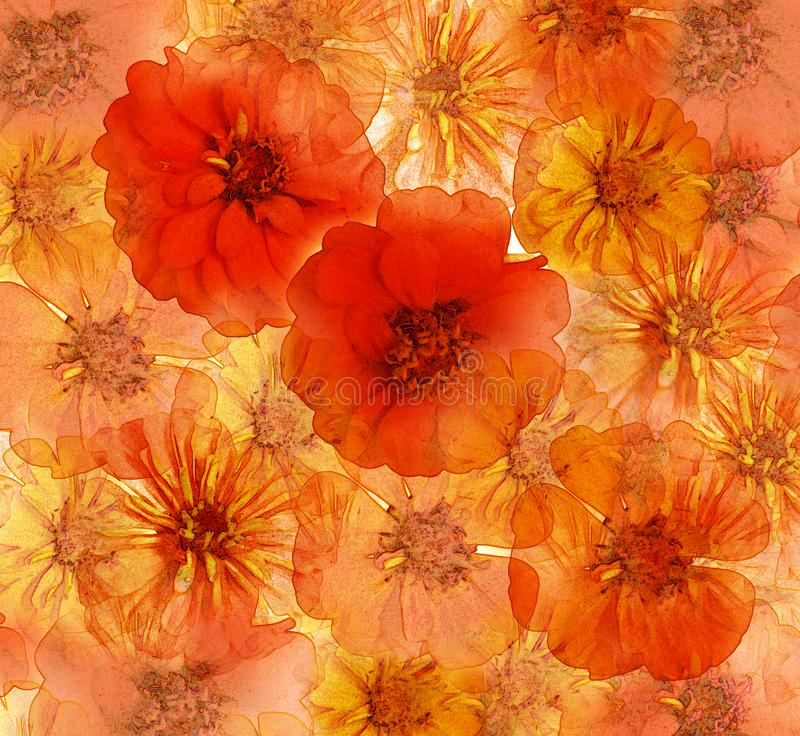 Abstract floral background with zinnia in red, yellow, orange colors vector illustration