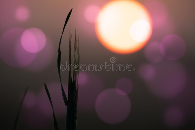 Abstract floral blurred  background. Plants at sunset on bokeh background royalty free stock photography
