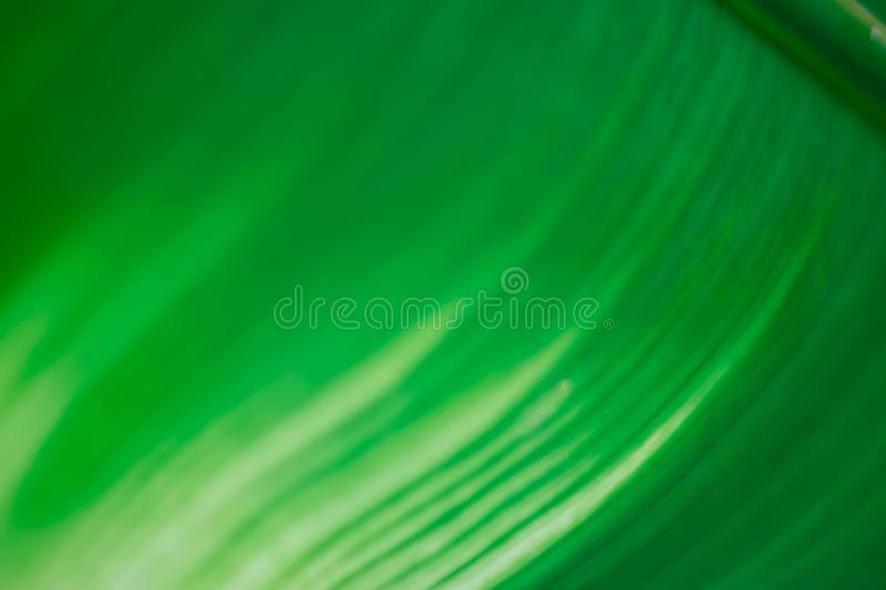 Abstract floral blurred background. Tropical palm leave backdrop royalty free stock photos