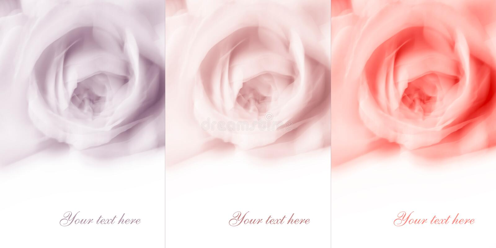 Abstract flower background with empty white space royalty free stock photography
