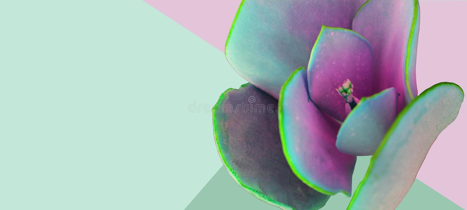 Abstract flower close-up in pastel colors. stock images